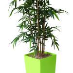 Bambou par Genexco